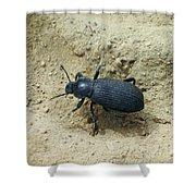 Darkling Beetle In Sand Shower Curtain