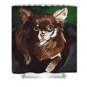Darla Chihuahua  Shower Curtain