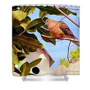 Darling Dove  Shower Curtain