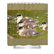Darling Ducklings  Shower Curtain