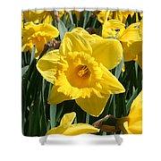 Darling Spring Daffodils Shower Curtain