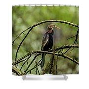 Darter At Rest Shower Curtain