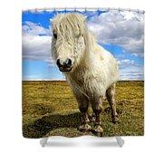 Dartmoor Pony Shower Curtain