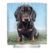 Daschund Shower Curtain