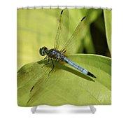 Dasher In My Pond Shower Curtain
