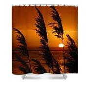 Dawn Grasses Shower Curtain