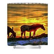 Dawn Horses Shower Curtain