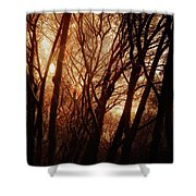 Dawn In The Trees Shower Curtain