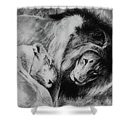 Dawn's A Coming Open Your Eyes - Lions Shower Curtain