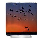 Dawns Action Shower Curtain