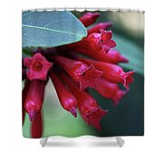 Day Blooming Jasime Shower Curtain