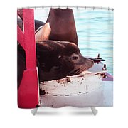 Day Dreaming Shower Curtain