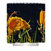 Day Lilies, Dark, Background Shower Curtain