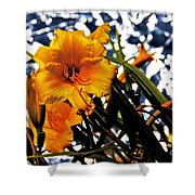 Day Lilies In  Space Shower Curtain