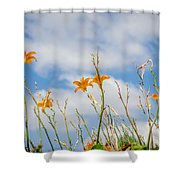 Day Lilies Look To The Sky Shower Curtain