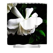 Day Lillie  Shower Curtain