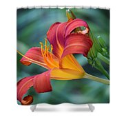 Day Lilly  Shower Curtain