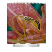 Day Lilly Stamens 1a Shower Curtain
