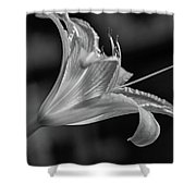 Day Lily 2 Bw Shower Curtain