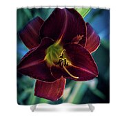 Day Lily Dark Shower Curtain