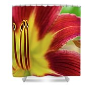 Day Lily Macro Shower Curtain