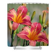 Day Lily Twins Shower Curtain