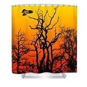 Day Of The Eagle Shower Curtain