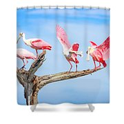 Day Of The Spoonbill  Shower Curtain