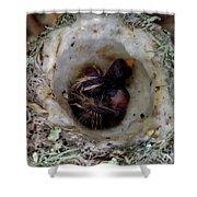 161549 Day Old Hummingbird Babies Shower Curtain