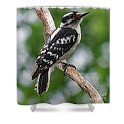Daydreaming Downy Woodpecker Shower Curtain