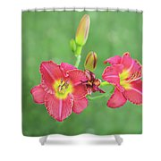 Daylilies Shower Curtain