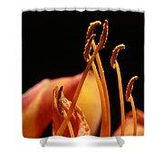 Daylilly Shower Curtain