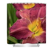 Daylily 2 Shower Curtain