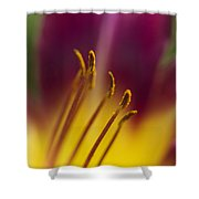 Daylily Abstract Shower Curtain