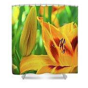 Daylily Bud And Bloom Shower Curtain