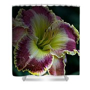 Daylily Collection # 13 Shower Curtain