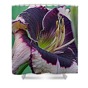 Daylily Collection #12 Shower Curtain
