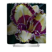Daylily Collection #9 Shower Curtain