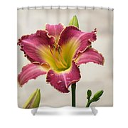 Daylily Delight Shower Curtain