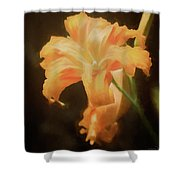 Daylily Dream Shower Curtain