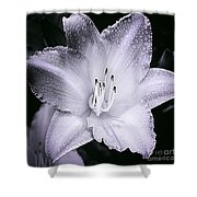 Daylily Flower With A Tint Of Purple Shower Curtain