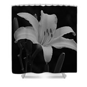 Daylily In Black And White Shower Curtain