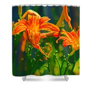 Daylily Trio Shower Curtain