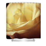 Days Of Creamy Rose Shower Curtain