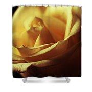 Days Of Golden Rose Shower Curtain