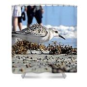 Daytona Beach Surf 001 Shower Curtain
