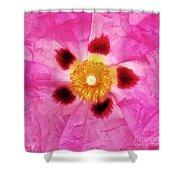Dazzler Shower Curtain