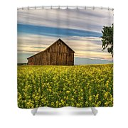 Dazzling Canola In Bloom Shower Curtain