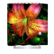 Dazzling Daylily  Shower Curtain
