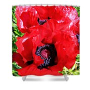 Dazzling Red Poppies Shower Curtain